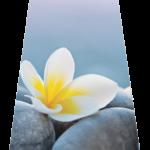 Plumeria Flower11